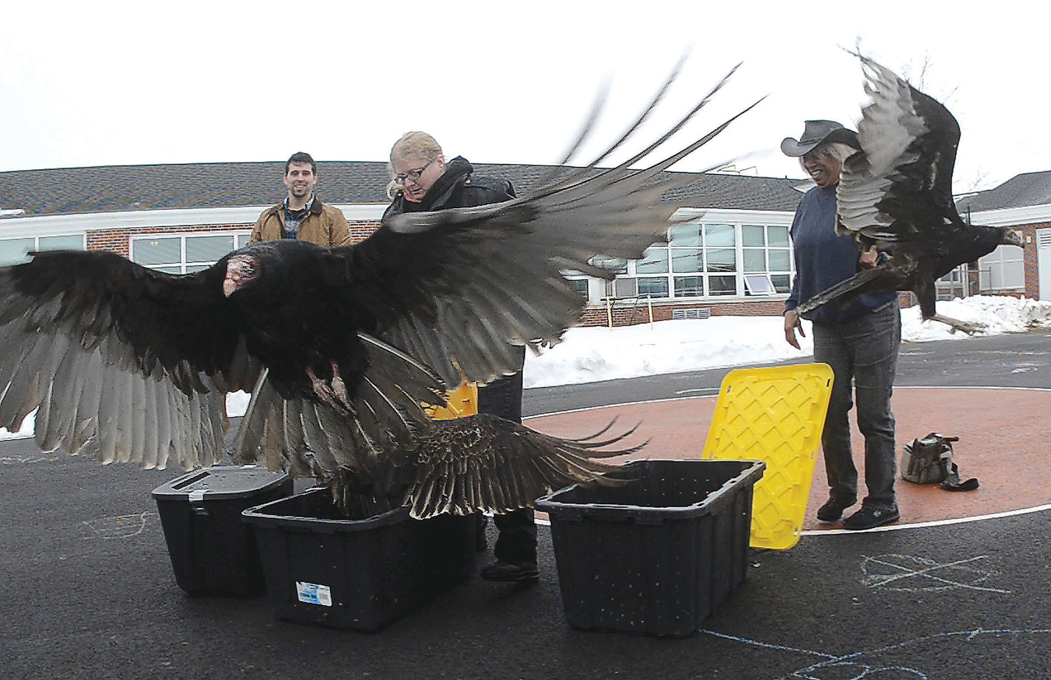 Zak Mertz, director of Cape Wildlife center, Olivia Legrow, of Mass Raptor center, and Marla Isaac, director of Mass Raptor Center, release five turkey vultures while Alice A. Macomber School children look out their windows on Thursday morning.