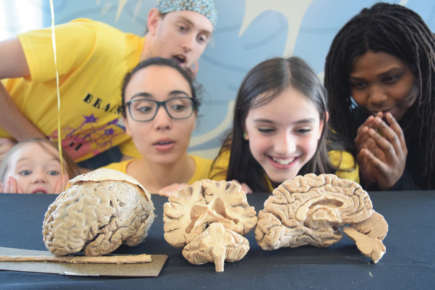 HANDS ON LEARNING: Kids gaze in wonder at pieces of the brain at the 2019 Brain Week Rhode Island festival.