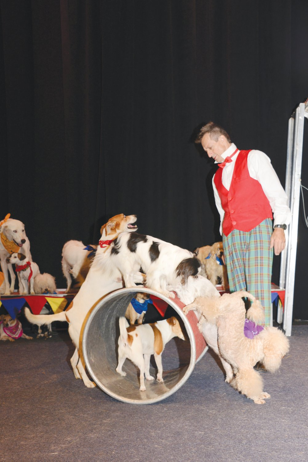 Funny K9 show coming to the Kirby