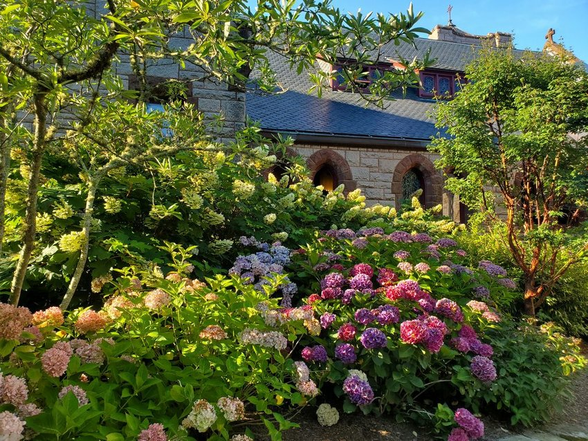 A diverse collection of several varieties of hydrangeas grace the grounds of St. Paul's Church on Fair Street.
