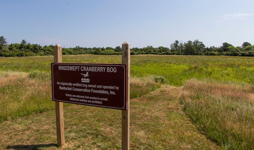 The Nantucket Conservation Foundation's Windswept Cranberry Bog.