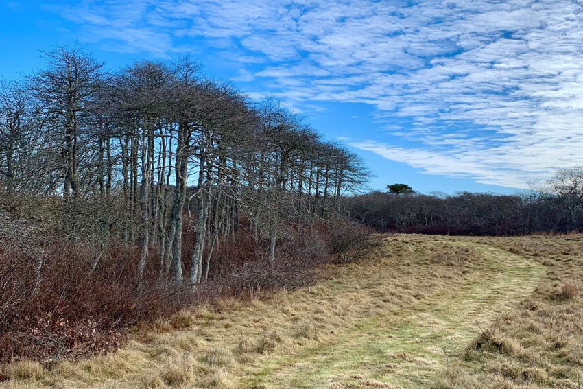 The Nantucket Land Bank has opened a new trail through its Beechwood Farm property in the middle moors.