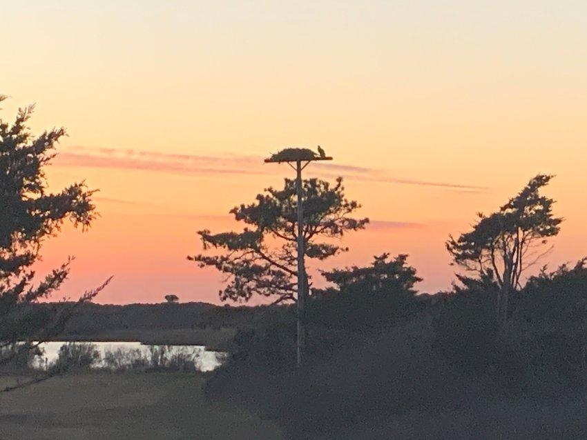 An osprey on a nest pole off Hummock Pond Road April 3.