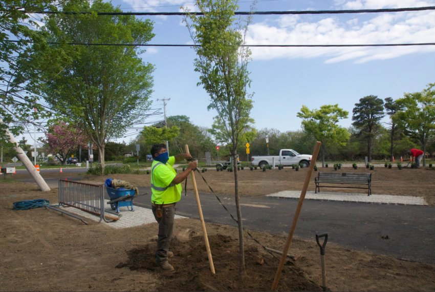 A Victor-Brandon Corp. worker plants a zelkova tree along the reconstructed bike path at the Milestone Rotary Monday.