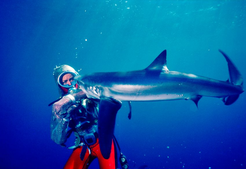 Valerie Taylor underwater wearing a chain mail suit being bitten on the arm by a shark in 1982.