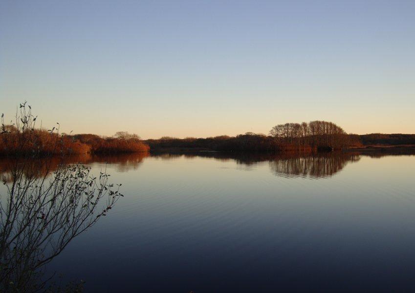 The Windswept Cranberry Bog,