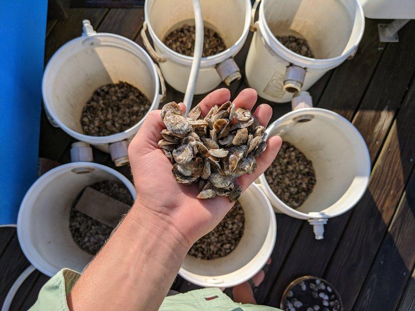Oyster upwellers at Madaket Marine.