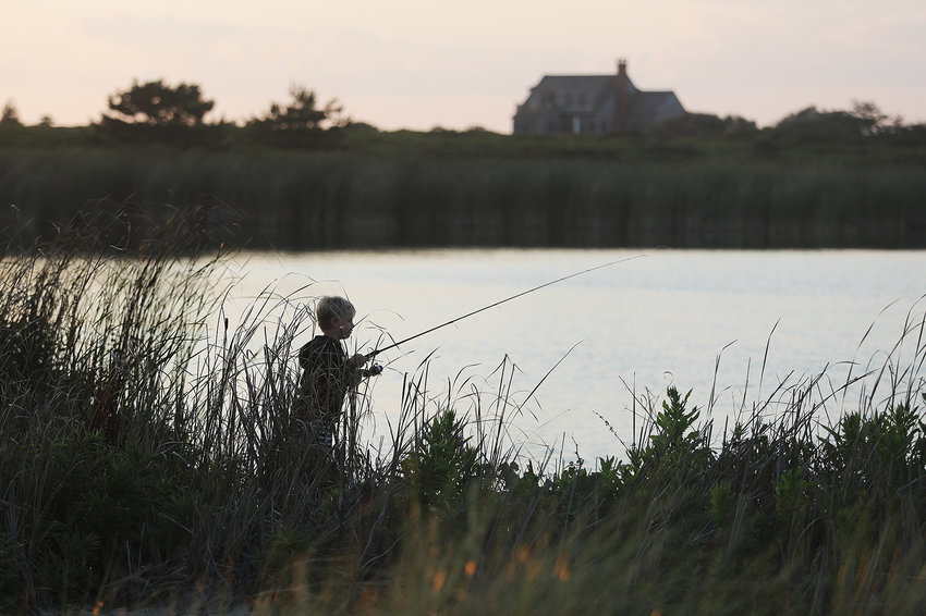 Excess nutrients from septic-system and fertilizer runoff in Miacomet Pond are feeding algae blooms and nourishing invasive plants that choke the shoreline.