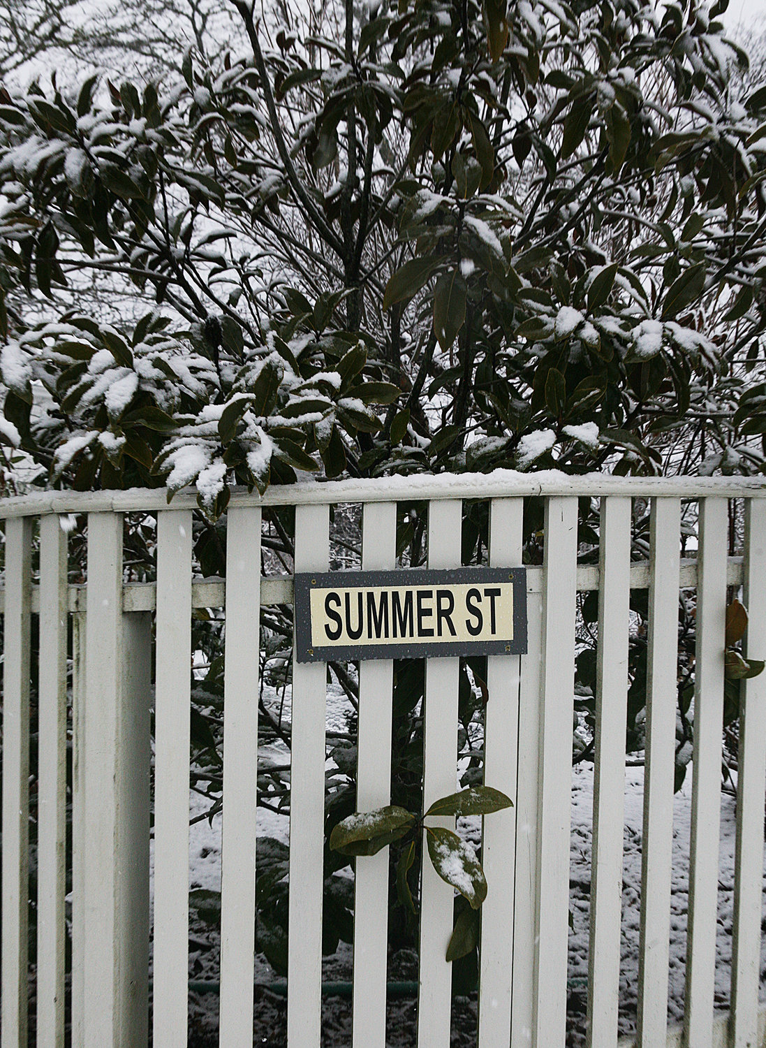 WINTER SCENES -- February 7, 2021 -- Is it summer yet? Snow on a tree at the intersection of Pleasant Street and Summer Street during Sunday's snow storm. Photo by Ray K. Saunders