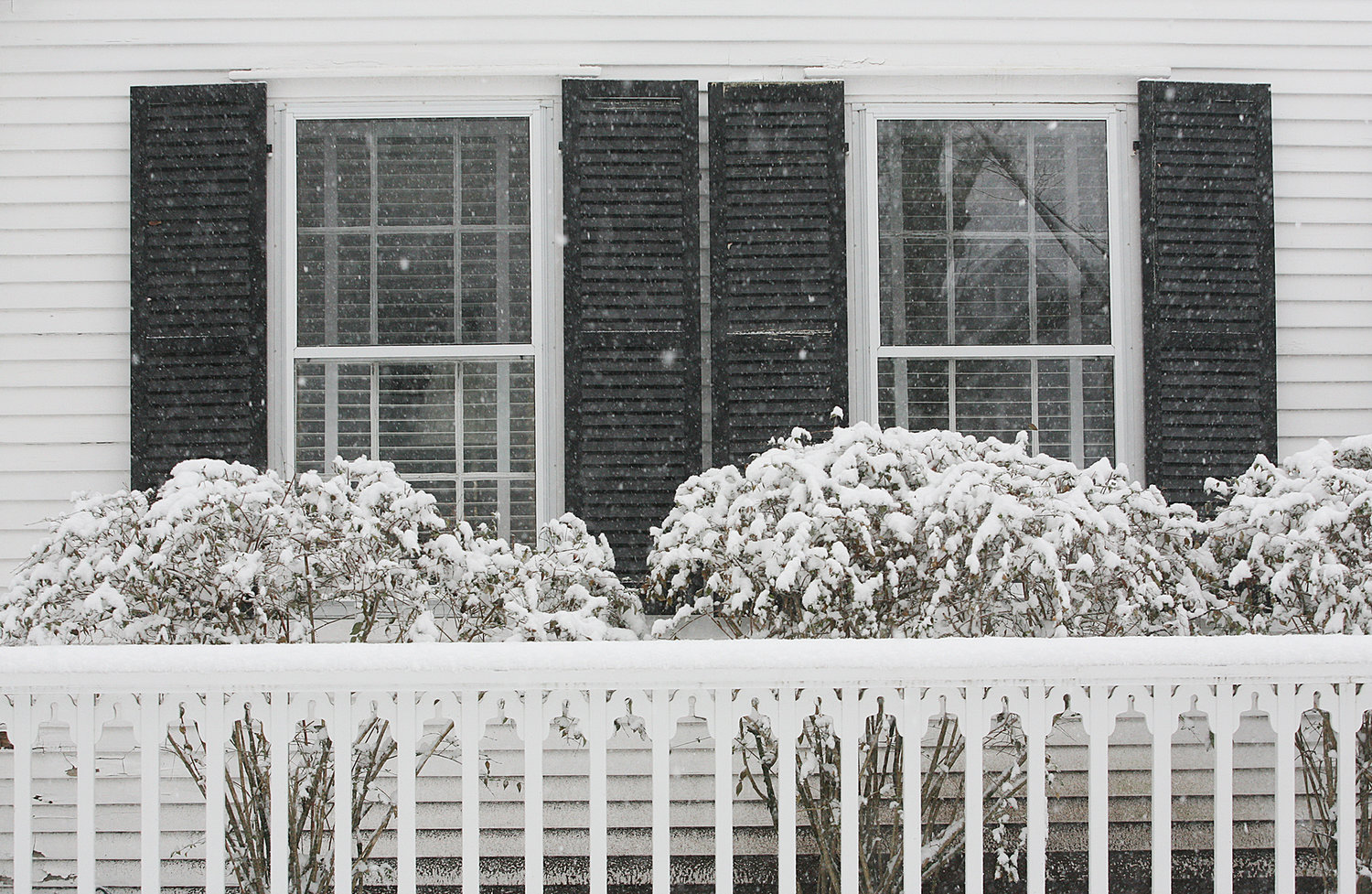 Snow coats bushes at a home on Main Street.