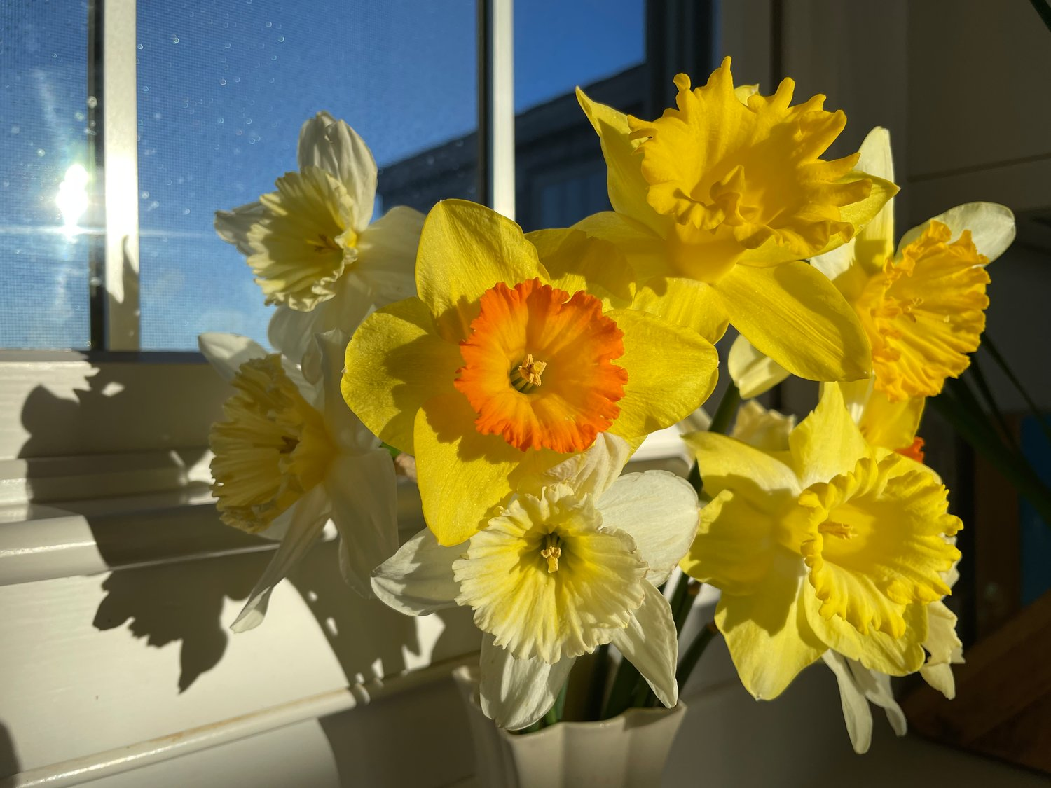 Photo by Hannah Judy.A vase of daffodils April 9.