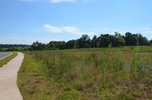 Site along Rollins Ford Road where the new high school may be built.