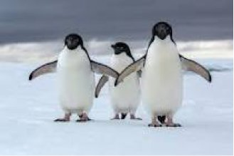 London Zoo is currently home to three same-sex Humboldt penguin couples – two male and one female – out of a total of 95 penguins, a higher percentage than the 5 percent of the human population estimated to be LGBT.