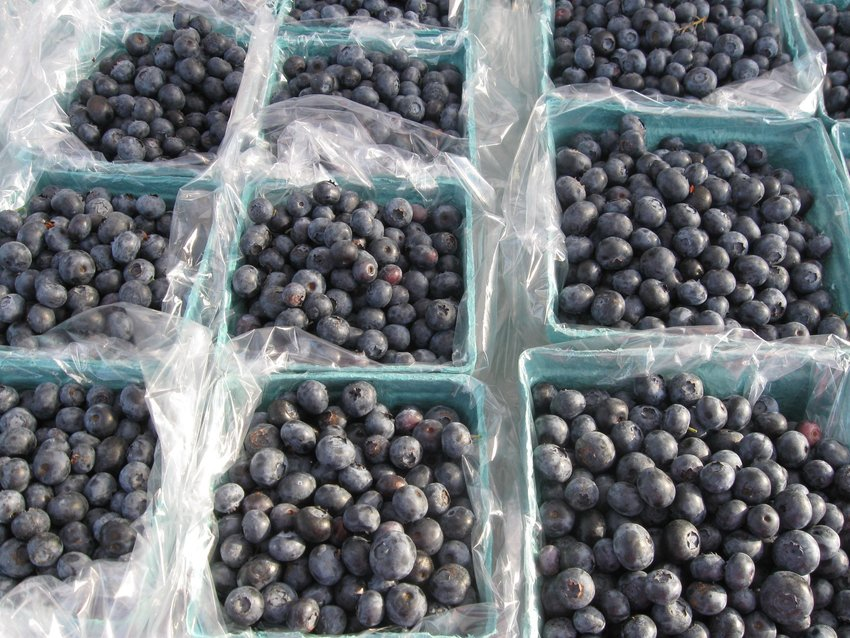 Blueberries at the Owosso Farmers Market.