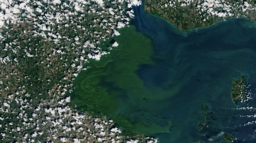 A severe toxic algal bloom began spreading over the western basin of Lake Erie last July