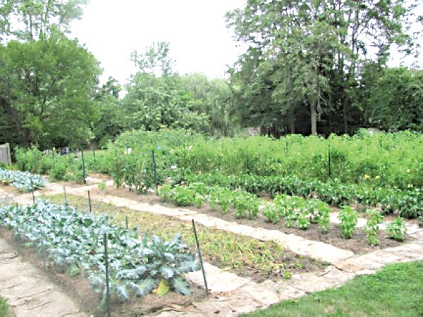 Urbandale Farms on the east side is among the largest of nearly 200 garden parcels the Land Bank's Garden Project has set up in the past 15 years.