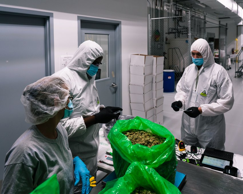 Between two facilities in Lansing and Bay City, staff at Viridis Laboratories provide testing services for the majority of the recreational and medical adult-use marijuana harvested in Michigan.