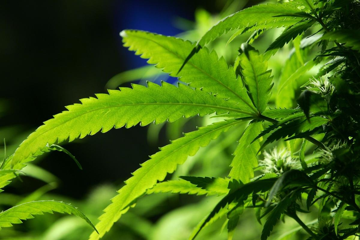 Report: THC in the bloodstream doesn't mean you're high