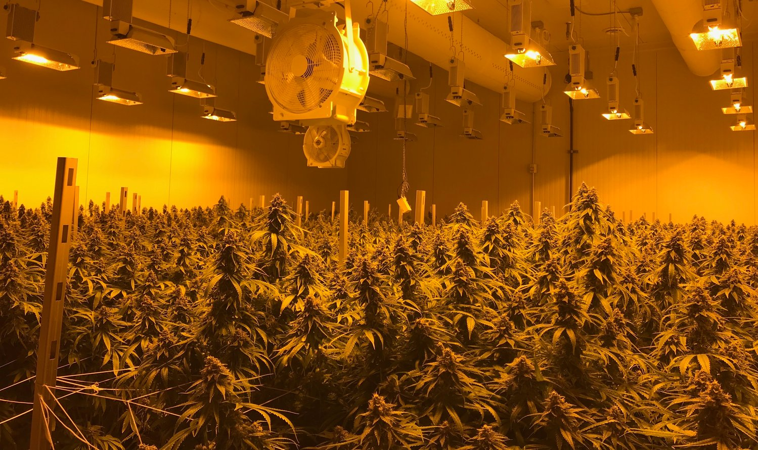 Licensed pot growers lock crosshairs on caregivers | City Pulse