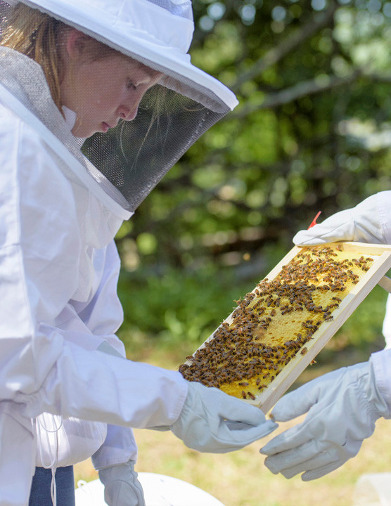 Ella Debenedictus, a student at St. Augustine's School, checks one of two hives the beekeeping club at the Ossining school oversees.