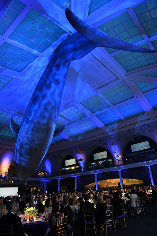 A large whale hands from the ceilin over the guests in the Milstein Hall of Ocean Life.