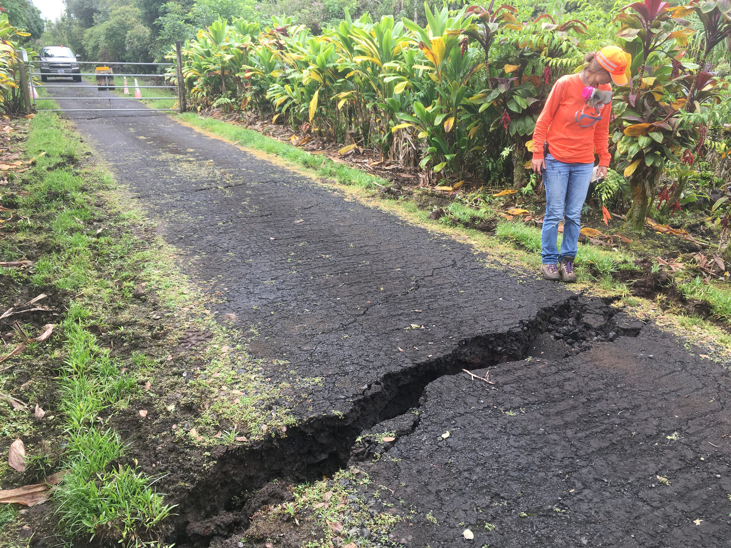 A geologist inspects a crack on Old Kalapana Road on the Big Island of Hawaii May 10.