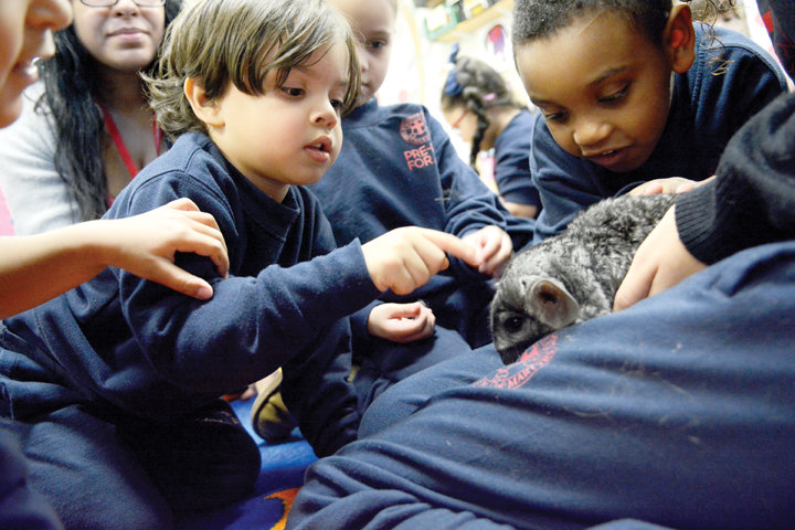GENTLE LESSON—Mattias Manon, left, and Jordan Lopez, pre-k students at Our Lady Queen of Martyrs School in Manhattan, learn about a chinchilla, one of a number of animal friends that are part of the school community, Jan. 30.