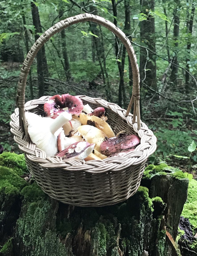 A bountiful autumn harvest of wild mushrooms on a local farm in western Rhode Island.