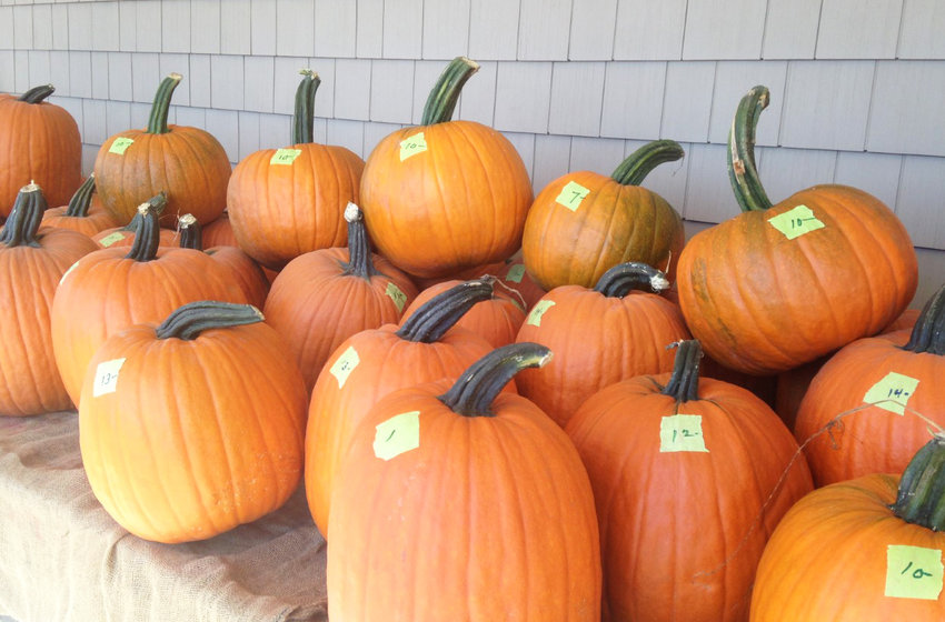 The fall harvest of pumpkins at Four Town Farm serves as an apt metaphor to celebrate the beginning of ConvergenceRI's seventh year of publication.