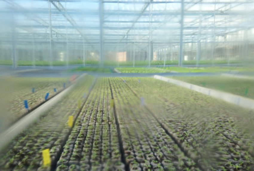 Inch by inch, row by row, the seedlings at the Gotham Greens facility in Olneyville are growing.