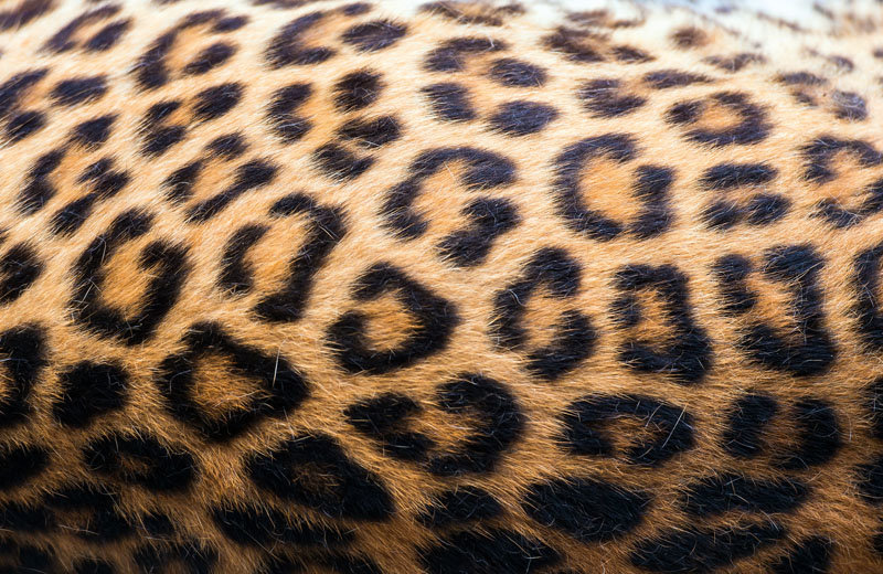 """""""Leopards don't change their spots, they just learn to hide them."""""""
