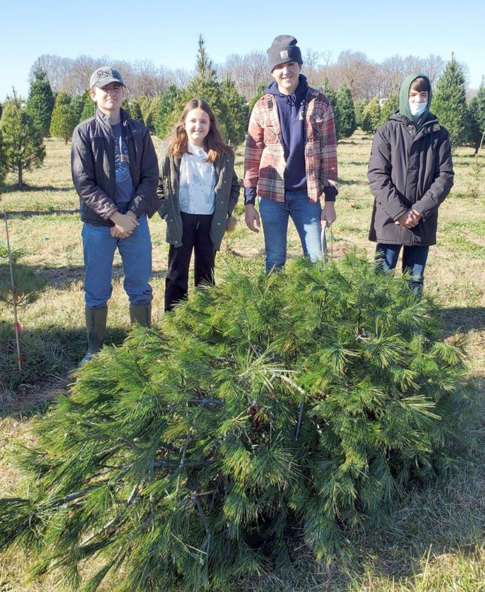 Finding the perfect Christmas tree is a favorite holiday tradition for the Brian Knodle family of Fillmore. From the left are Alden, Fallon, Kendall and Bond Knodle.