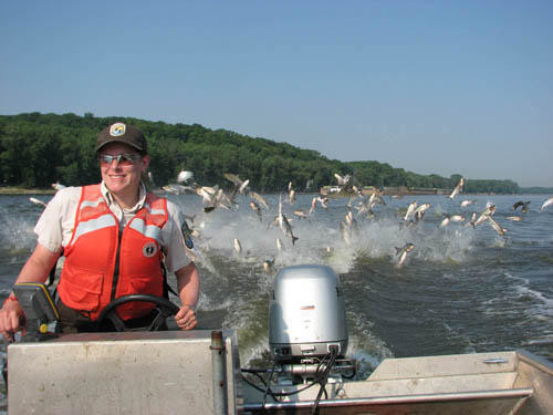 Bevin announced the award of the state's first-ever fish house contract.  Kentucky Fish Center, LLC of Wickliffe, Ky., will establish the fish house, which will expand the market for Kentucky-caught Asian carp. (Kentucky Department of Fish and Wildlife photo)