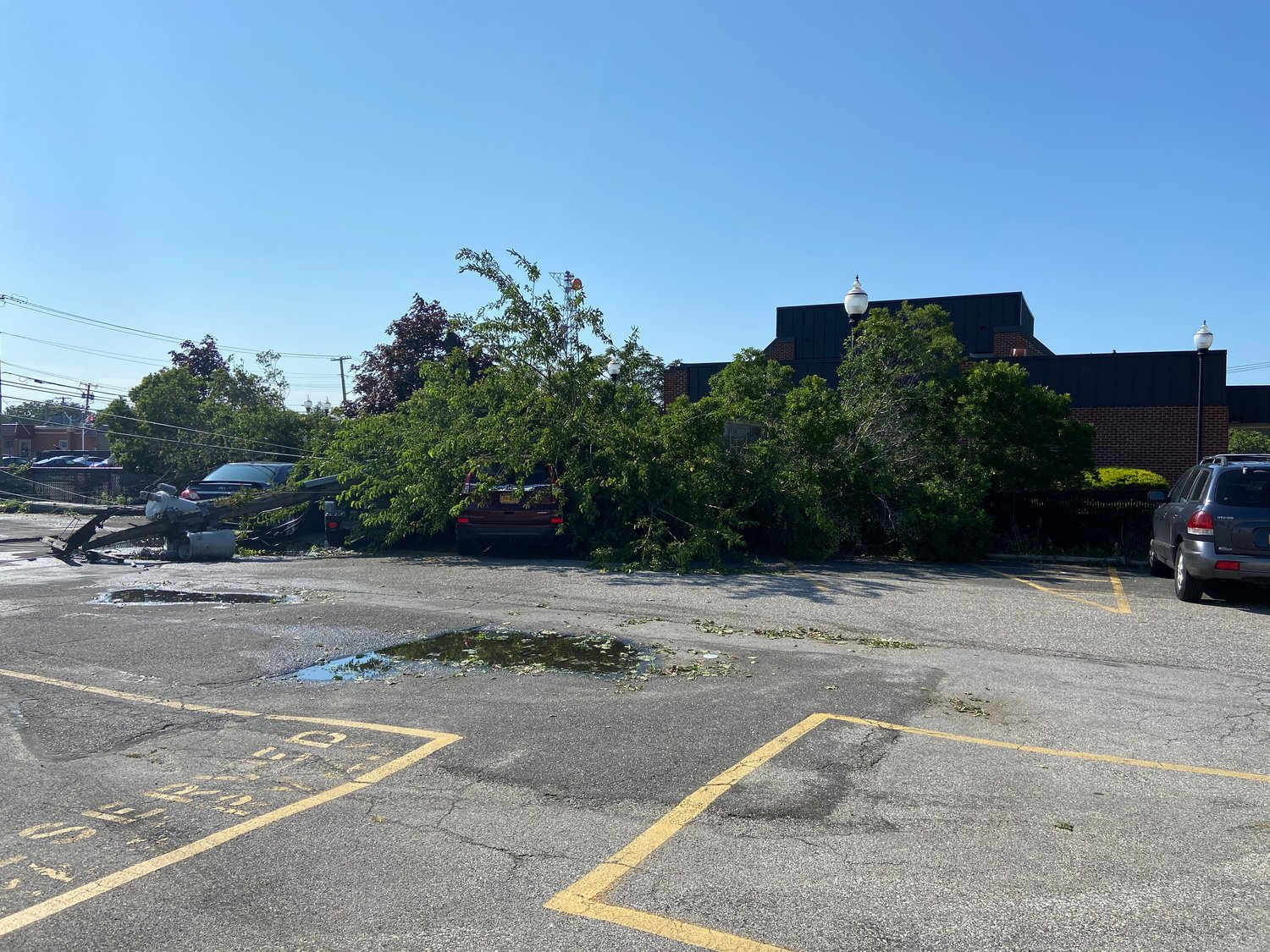 Downed trees and power lines at the Advance building Wednesday