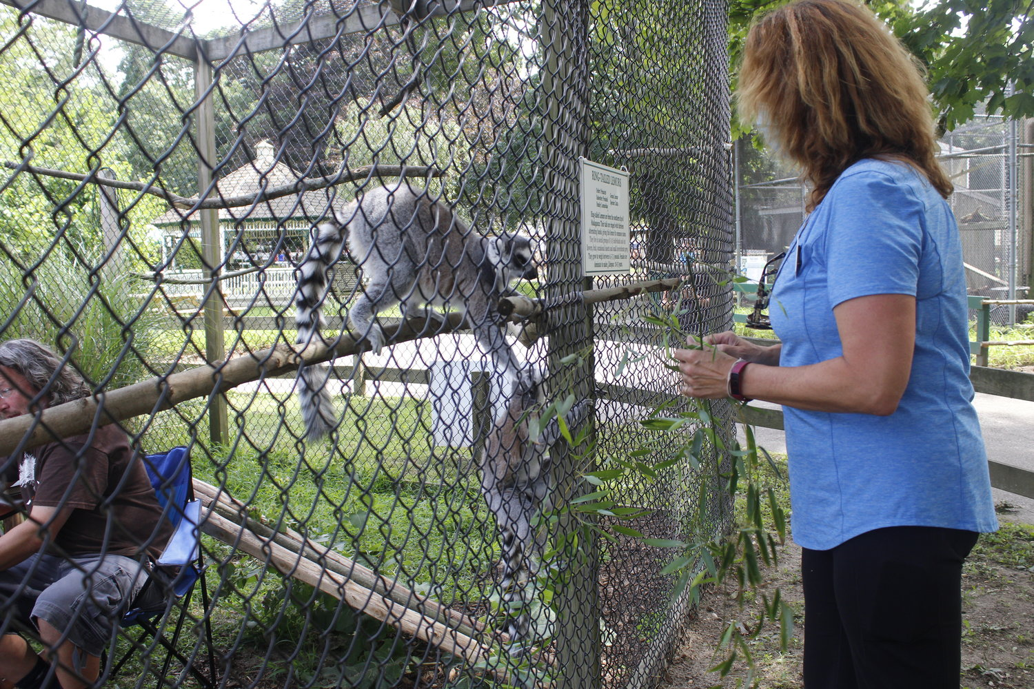 Long Island Game Farm owner Melinda Novak excites the lemurs with some locally-grown bamboo.