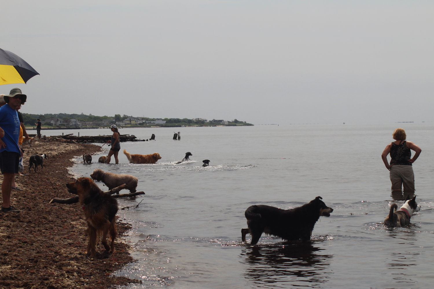 A Long Island dog advocacy group wants to get New York State to allow dogs on some of the 14,000 miles of shoreline.
