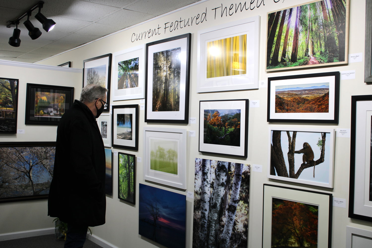 "The current exhibit at the Long Island Photo Gallery on Main Street in Islip is ""Among the Trees."""