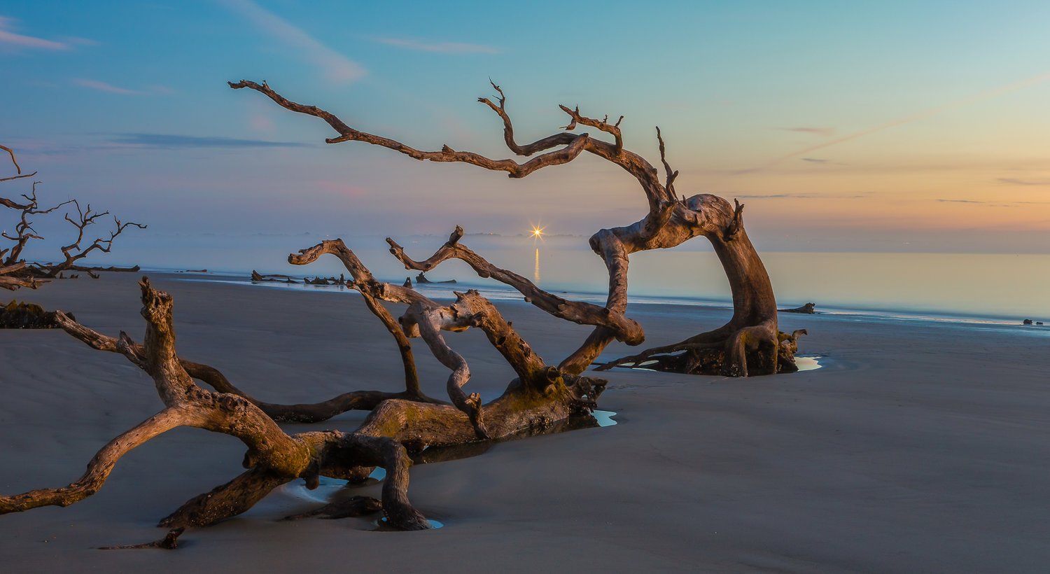 """Driftwood In The Mist"" by Rich LaBella."