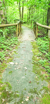 The path of the Koen Interpretive Trail travels through different spurs of a path. The adventure has signs that identify 24 different trees in the forest.
