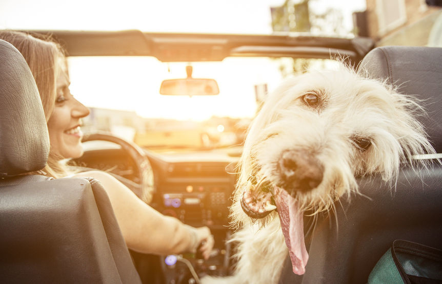 Remember your pets if they'll be accompanying you on your summer vacations.