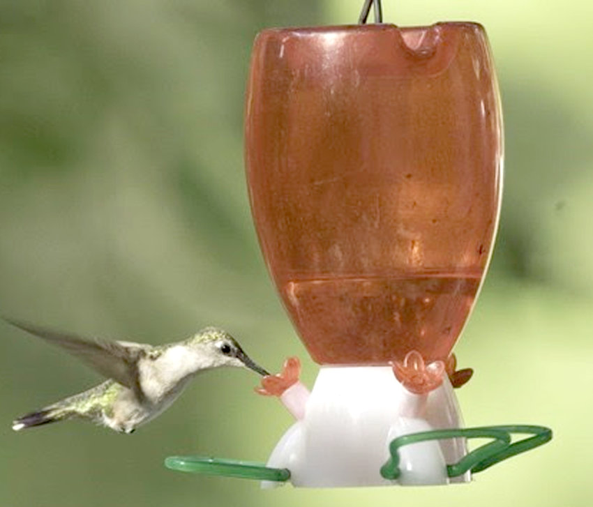 DID YOU KNOW: Ruby-throated hummingbirds average 55-wing strokes per second! These speedy birds often hover, but can also fly upside down and backwards. Males will show off their skills by flying back and forth in a U-shape to attract a female, like the one seen here. Learn more by visiting MDC's online Field Guide at short.mdc.mo.gov/ZZL.