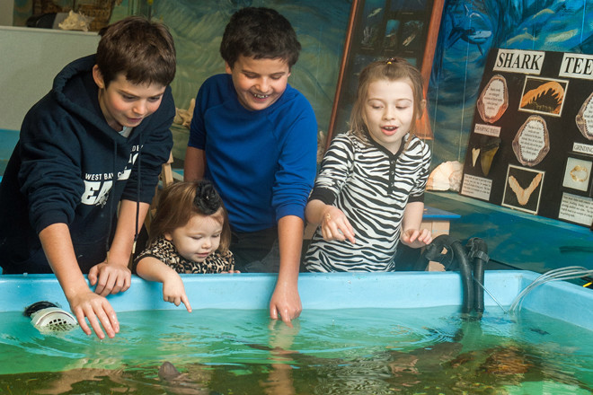 Biomes Marine Biology Center offers hands on fun while learning