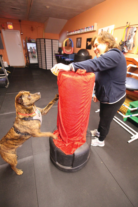 DOG WITH A PUNCH: Deb Quattrini works with Hunter on his punching – actually more of a stretch at the gym.