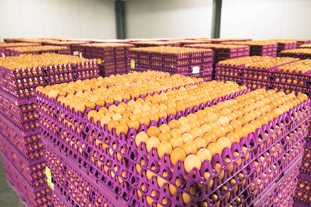 WHOLESALE READY: Pallets of 900 dozen eggs apiece wait to be washed and placed in cartons.