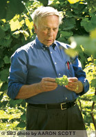 Ken Meyer inspects grapes at Meyer Farms Inc., his 30-acre vineyard southwest of Mount Vernon.