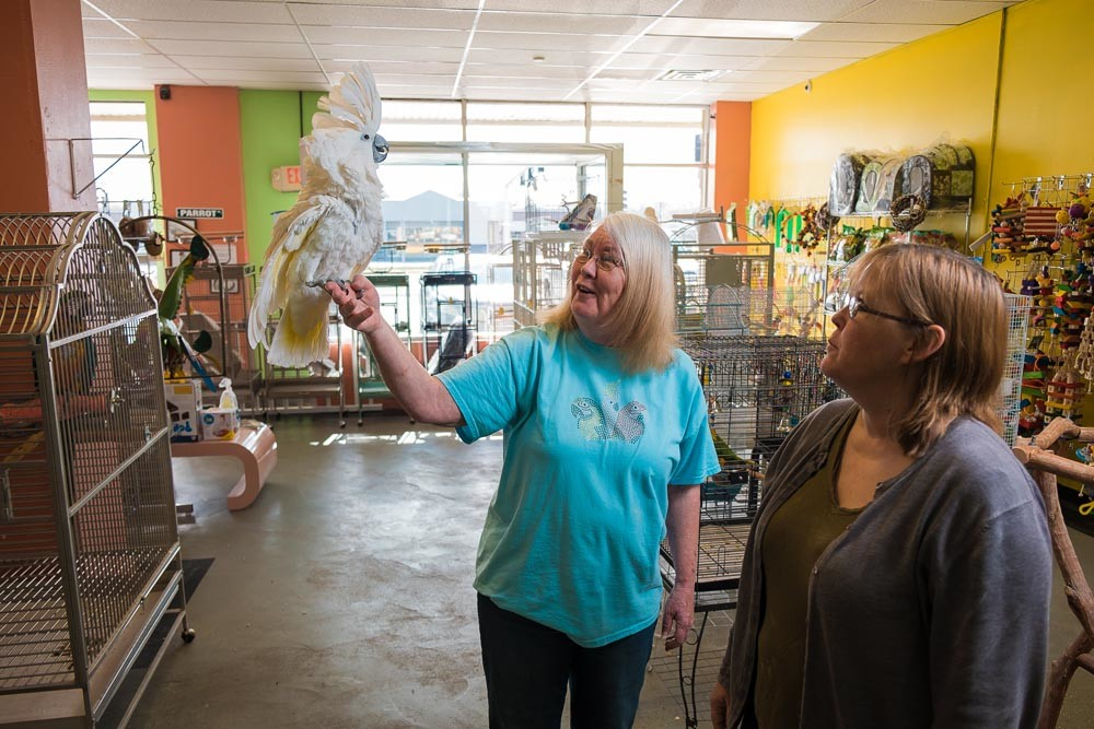 FEATHERED FRIENDS: Sharon Roberts, left, and her daughter Jennifer spend time with Sweet Pea, an umbrella cockatoo, after feeding the bird at their store.