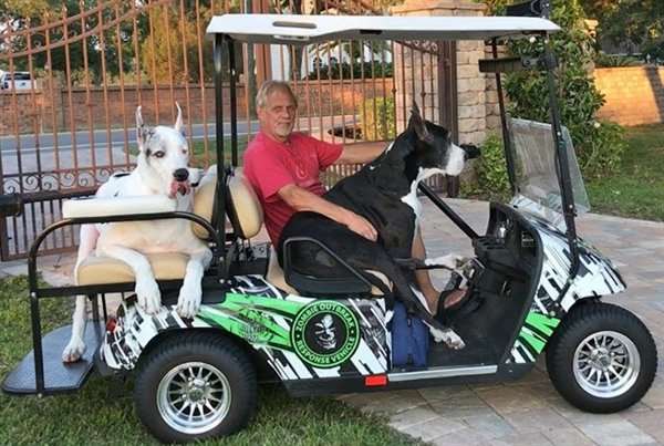 Golf cart rules and regulations now in effect are only one golfer is permitted to ride in golf carts. We had to add some levity to our golf news this week and selected this photo.....not sure if the dogs in this golf cart make illegal on our golf courses at this time.