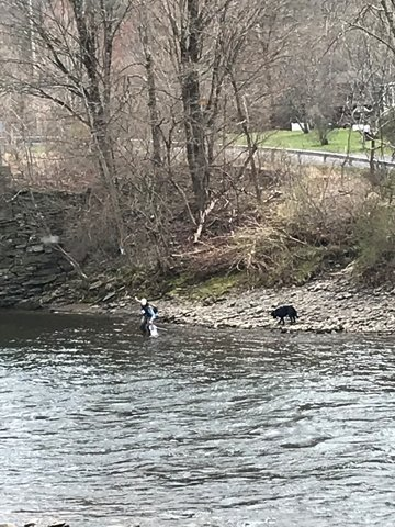 Good productive fishing was had this weekend; a Beaverkill angler out with his dog netted a nice trout.