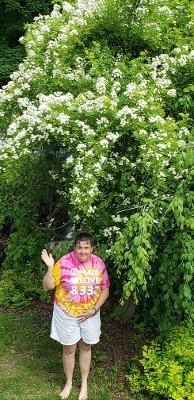 My wife, Vicki, under our weeping Katura & wild rose tree.