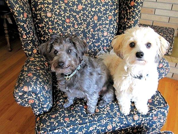 My Doggies, George and Gracie.